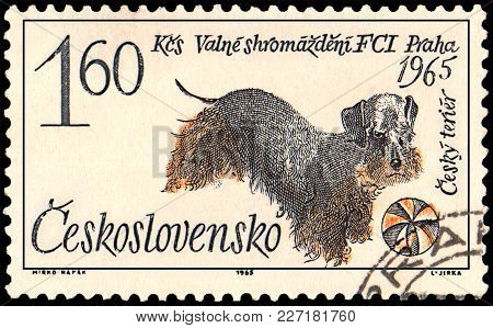 Czechoslovakia - Circa 1965: A Postage Stamp, Printed In Czechoslovakia, Shows A Czech Terrier Dog