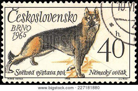 Czechoslovakia - Circa 1965: A Postage Stamp, Printed In Czechoslovakia, Shows A German Shepherd, Se