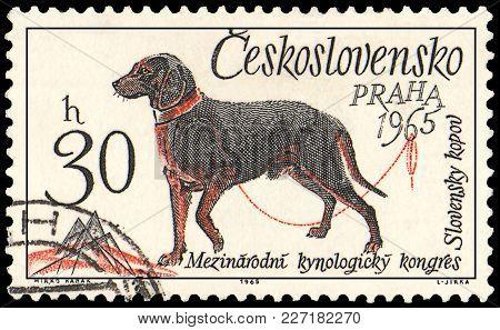Czechoslovakia - Circa 1965: A Postage Stamp, Printed In Czechoslovakia, Shows A Slovakian Kopov Dog