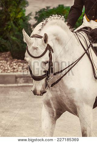 Young Elegant Rider Woman And White Horse. Advanced Dressage Test On Equestrian Competition. Profess