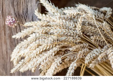 Bunch of dried cereals with selective focus