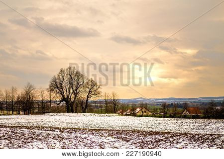 Tree By Snowy Field In The Evening At The Edge Of Prague