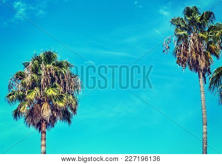 Palm Trees Under A Blue Sky In Los Angeles, California. Vintage Tone Effect