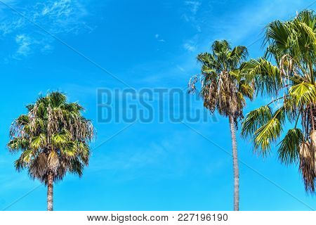 Palm Trees Under A Blue Sky In Los Angeles, California