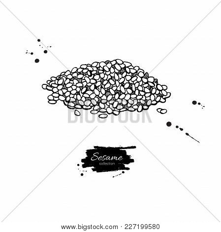 Sesame Seed Vector Drawing. Hand Drawn Food Ingredient. Sketch Seed Heap. Agriculture Grain Engraved