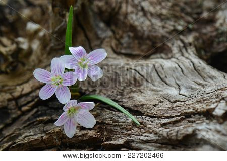 spring flowers on a dead tree trunk background