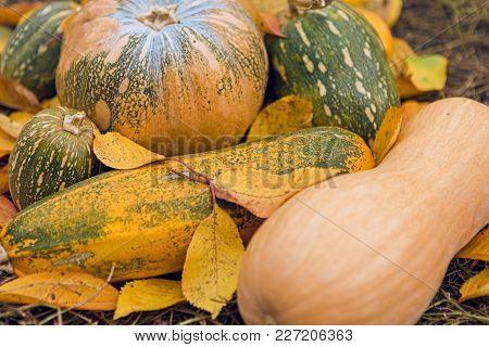 pumpkin crop, autumn leaves, harvest, golden autumn