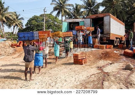 Murdeshwar, India - March, 1st, 2017. Fishermen Load Their Catch In The Truck