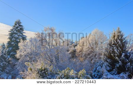 A White Winter Landscape  / View Of Snow Covered Trees During The Winter