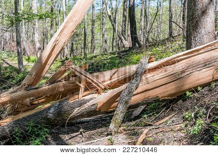 Splintered Tree Fallen Across Trail After Heavy Storms