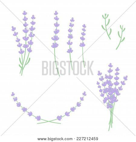 Set Of Lavender Sprigs, Flowers And Leaves. Floral Design Elements Constructor For Frames And Bouque
