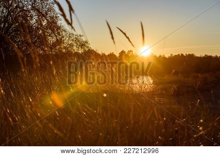Beautiful Sunset Over The Lake Among The Reeds