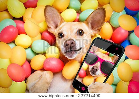 Happy Easter Dog Lying In Bed Full Of Funny Colourful Eggs ,  Taking Or Sharing A Selfie , With Smar