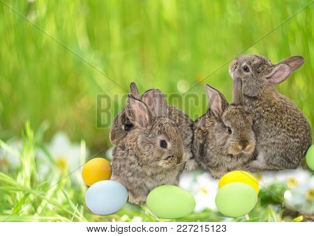 Happy Easter card with copy space. Easter bunnies with Easter painted eggs on green grass with white flowers blurred background. Easter bunnies with Easter painted eggs. Little Easter bunnies with colored easter eggs. Easter bunny concept. Easter bunny eg