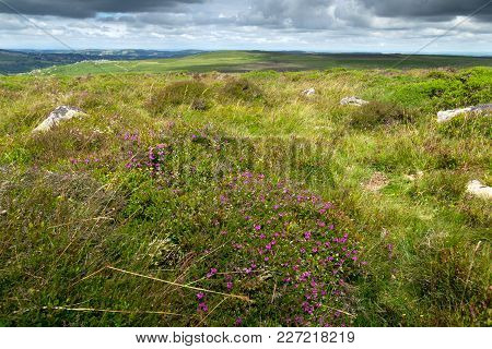 Landscape Of Dartmoor National Park. View In The Area Of Heytor. Devon. England