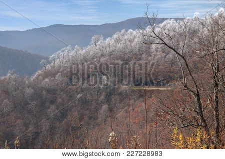 Frost Coats The Tips Of The Trees Near The Blue Ridge Parkway