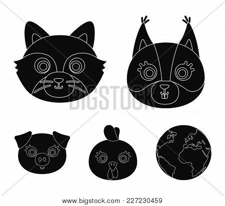 Protein, Raccoon, Chicken, Pig. Animal's Muzzle Set Collection Icons In Black Style Vector Symbol St