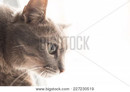 Beautiful Gray Cat On Window Background For Any Purpose