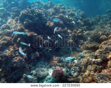 Sealife Of Champagne Bay, Espiritu Santo, Vanuatu