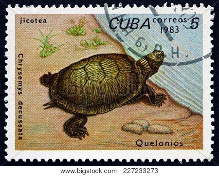 Cuba - Circa 1983: A Stamp Printed In Cuba Shows Cuban Slider, Chrysemys Decussata, Is A Species Of
