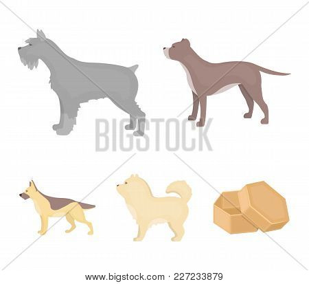 Pit Bull, German Shepherd, Chow Chow, Schnauzer. Dog Breeds Set Collection Icons In Cartoon Style Ve