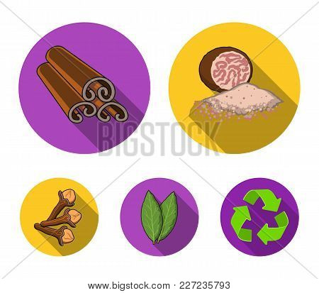 Nutmeg, Cinnamon, Bay Leaves, Cloves.herbs And Spices Set Collection Icons In Flat Style Vector Symb