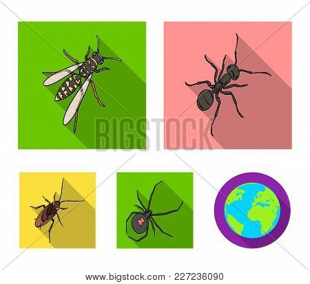 An Insect Arthropod, An Osa, A Spider, A Cockroach. Insects Set Collection Icons In Flat Style Vecto