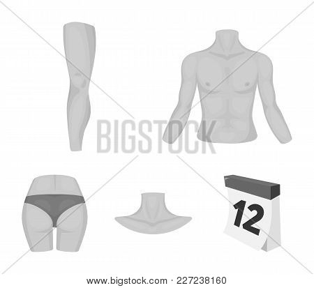 Torso, Leg, Neck And Buttocks. Body Parts Set Collection Icons In Monochrome Style Vector Symbol Sto
