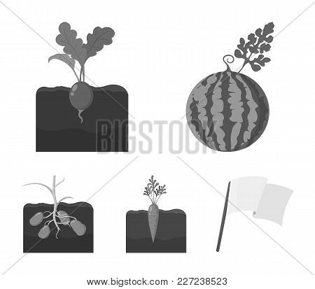 Watermelon, Radish, Carrots, Potatoes. Plant Set Collection Icons In Monochrome Style Vector Symbol