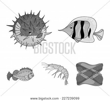 Shrimp, Fish, Hedgehog And Other Species.sea Animals Set Collection Icons In Monochrome Style Vector