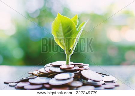 Plant Growing From Piles Of Money On Blurred Green Natural Background For Business And Financial Gro