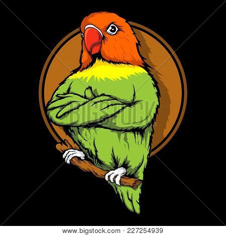 lovebird parrot vector photo free trial bigstock lovebird parrot vector photo free