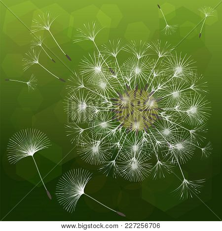 Abstract Background Of A Dandelion For Design. The Wind Blows The Seeds Of A Dandelion. Template For