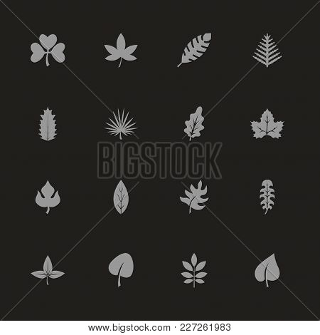 Herb Icons - Gray Symbol On Black Background. Simple Illustration. Flat Vector Icon.
