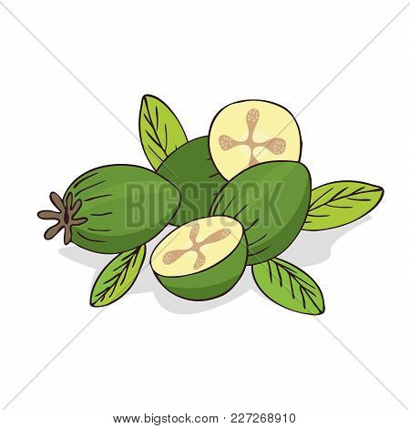 Isolate Ripe Guava Fruits Or Feijoa On White Background. Close Up Clipart With Shadow In Flat Realis