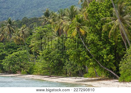 Palm trees on the beautiful empty tropical beach on Koh Chang island in Thailand