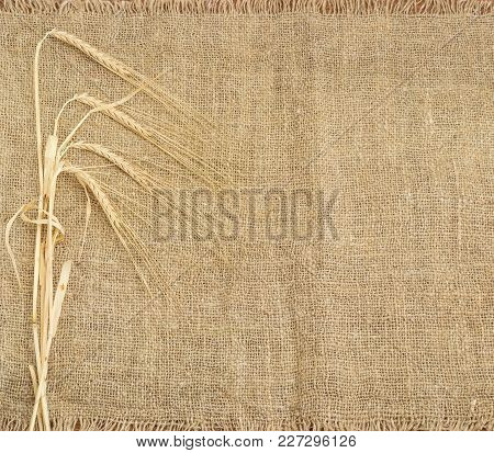 Background Of The Burlap Made Of Natural Coarse Unpainted Spinning Fibers From Hemp And Barley Stems