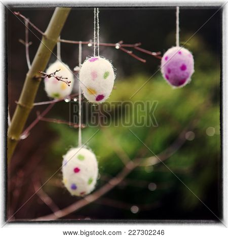 Easter Eggs Hanging On A Branch With Raindrops