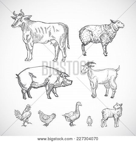 Hand Drawn Domestic Animals Set. A Collection Of Pig, Cow, Goat, Lamb And Birds Silhouettes. Engravi