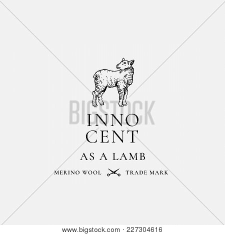 Innocent As A Lamb. Abstract Vector Sign, Symbol Or Logo Template. Hand Drawn Lamb Sillhouette With