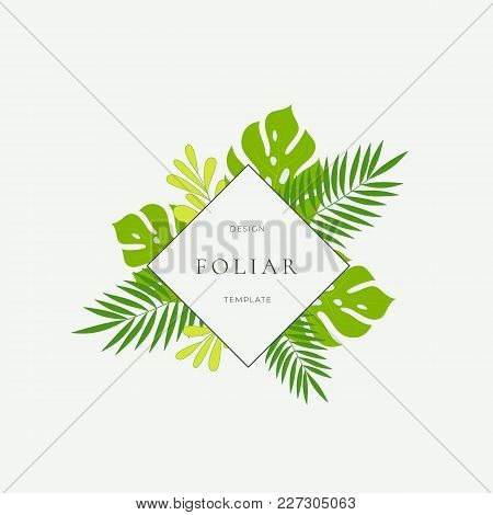 Tropical Leaves Fashion Sign, Card Or Logo Template. Abstract Green Monstera Foliage With Rhombus Bo