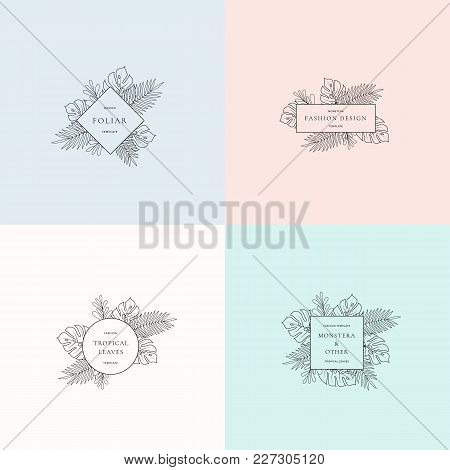 Set Of Monstera Tropical Leaves Fashion Signs Or Logo Templates. Abstract Foliage With Borders And C