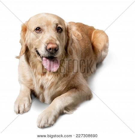 Cute Big Dog Color White Background Vitality
