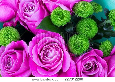 Bright Pink Roses Background.pink Roses Background.pink Rose In The Garden.beautiful Pink Rose In Th