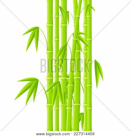 Stems Of Bamboo In Simple Style On White Background