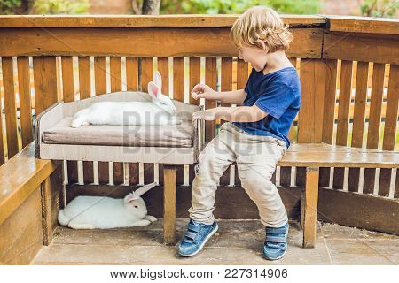 Toddler Boy Caresses And Playing With Rabbit In The Petting Zoo. Concept Of Sustainability, Love Of