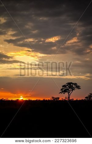 Silhouette Tree At Sunset In An African Game Reserve