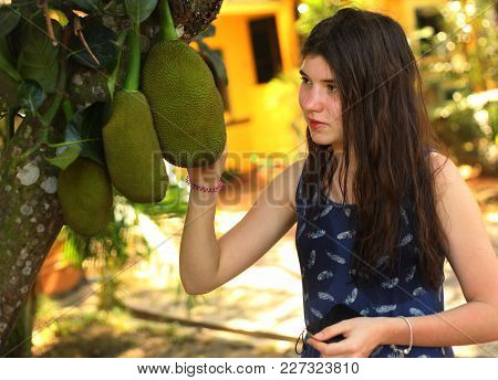 Teenager Girl With Whole Jackfruit On The Tree Close Up Outdoor Photo