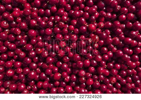 Fruit Pattern Of Fresh Red Ripe Foxberries.
