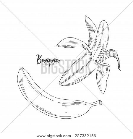Drawing Of Isolated Partially Peeled Banana On The White. Healthy Food. Engraving Sketch Vintage Sty